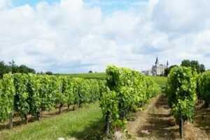 Guía PRL Sector vitivinícola
