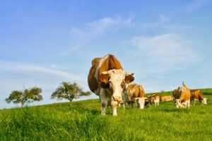 Riesgos Biológicos más habituales en las explotaciones lácteas