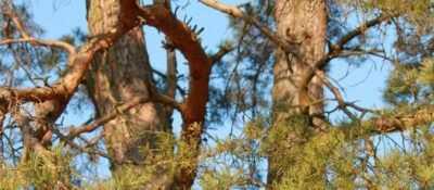 Herido un trabajador forestal al caerle encima un árbol en Arrankudiaga